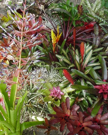 bromeliad.panorama Webs On Houseplants on